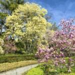 """Magnolia Plaza"" by PaulCoco"