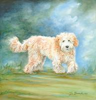 Labradoddle 2