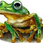 """""""Javan Gliding Frog"""" by inkart"""
