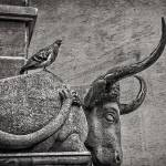 """The Pigeon and the Sleeping Stone Bull"" by WilshireImages"
