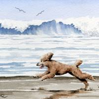 Brown Poodle at the Beach Art Prints & Posters by David Rogers