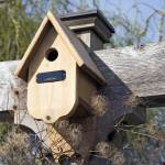 """Birdhouse"" by cvpictures"