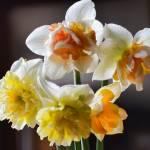 """""""DSC_0022"""" by flowercard"""