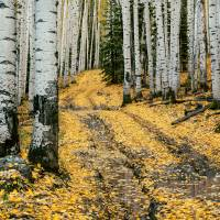 The Yellow Leaf Road Art Prints & Posters by Santomarco Photography