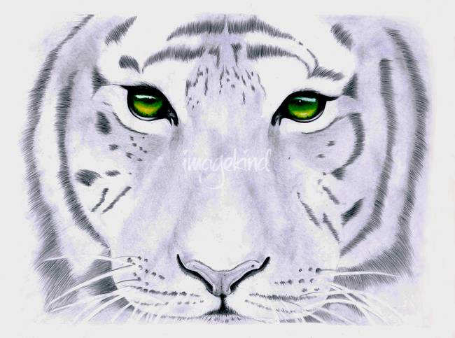 """Stunning """"Jordan"""" Pencil Drawings And Illustrations For ..."""
