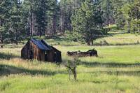 Old Cabin In Black Hills
