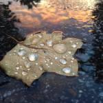 """Rain Drop Sunset"" by kFergPhotos"
