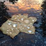 """Rain Drop Sunset"" by kFergPhotos"