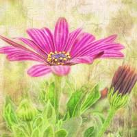 Pink Flower Art Prints & Posters by Wall Art by AnaCBStudio