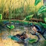 The Hillsborough River- A Quiet Life / wood ducks