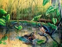 The Hillsborough River- A Quiet Life / wood ducks