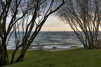 Mackinac Bridge Thru Trees