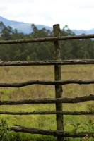 Wood Fence in a Pasture
