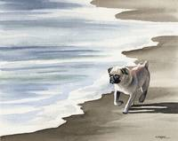 Pug at the Beach