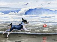 Rat Terrier at the Beach