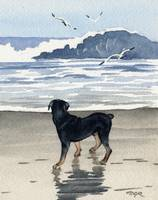 Rottweiler at the Beach