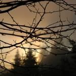 """""""Fog"""" by Kibondo"""