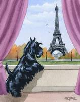 Scottish Terrier in Paris