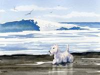 White Scottish Terrier on the Beach
