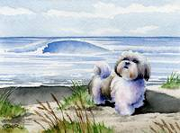 Shih Tzu at the Beach