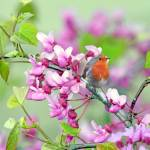"""Robin in the Spring"" by Ninas4otos"