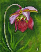 Pitcher Plant by Janet L. Fowlow