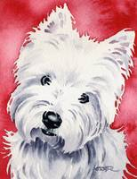 West Highland Terrier 2