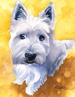 West Highland Terrier 4