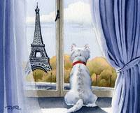 West Highland Terrier in Paris