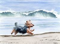 Yorkshire Terrier at the Beach