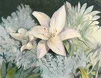Lillies In The Moonlight