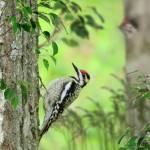 """""""Woodpeckers"""" by Ninas4otos"""