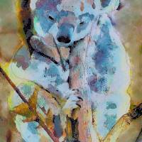 Koala by Lisa Rich