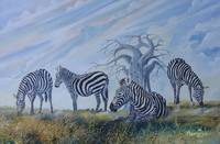 Zebras browsing in Tsavo