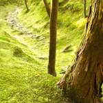 """Mossy Path"" by ropixie"