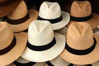 Brown and White Panama Hats