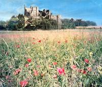 Castle and flower Meadow