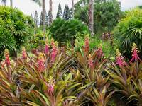 Hawaiian Garden