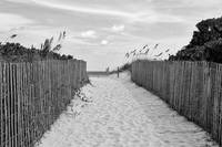 Beautiful Beach Day - Black and White by Carol Groenen