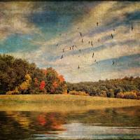 The Tints of Autumn Art Prints & Posters by Pamela Phelps