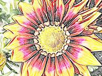 Floral Color Art Sketch