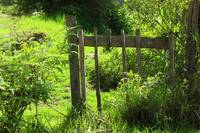 Wood Gate in a Pasture