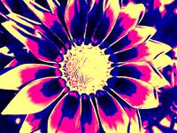 Flower Pop Art