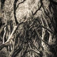 Dark Hedges Art Prints & Posters by Thomas Key