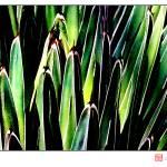 """Yucca No. 1"" by MBush1us"