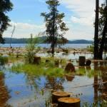 """Lake Shore Through The Eyes Of Nature"" by artsandi"