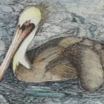"""C:\fakepath\pelican"" by nadineunzicker"