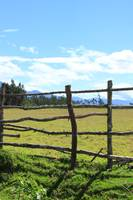 Fence and a Pasture