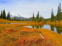 Peace And Harmony - Mount Rainier National Park