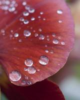 Drops of Beauty